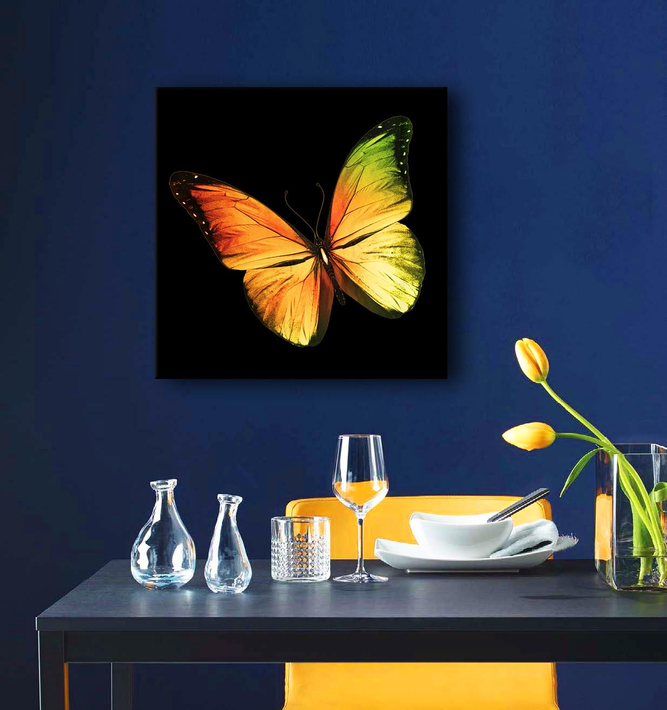 Obraz Motýľ 3D na zrkadle Mirrora 04 - 50x50 cm (Obrazy Mirrora)