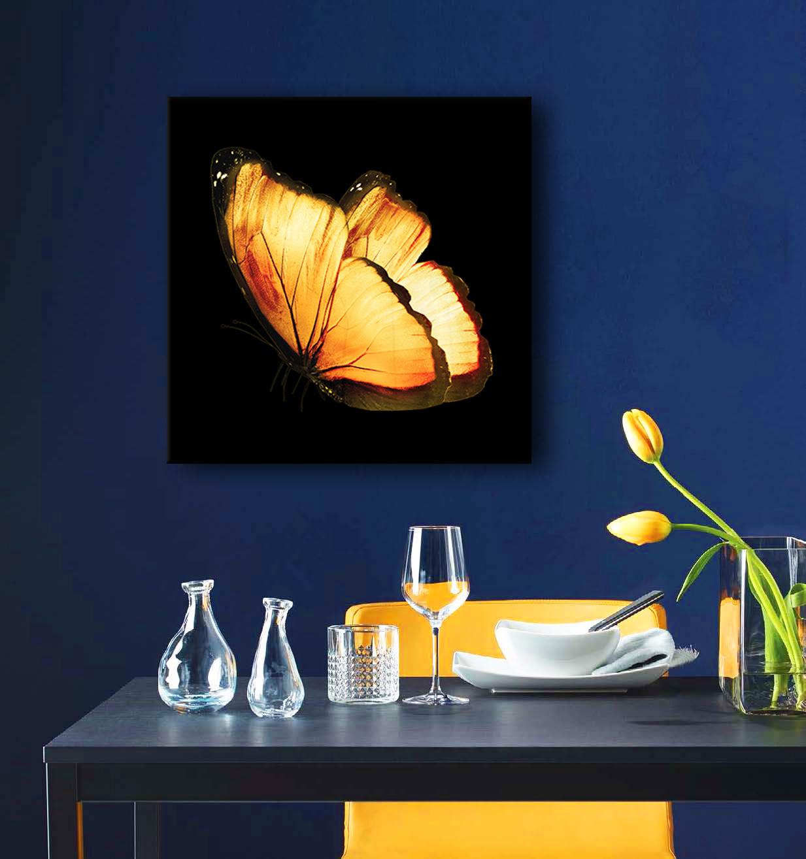 Obraz Motýľ 3D na zrkadle Mirrora 05 - 50x50 cm (Obrazy Mirrora)