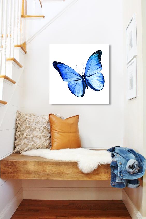 Obraz Modrý Motýľ na zrkadle Mirrora 13 - 50x50 cm (Obrazy Mirrora)