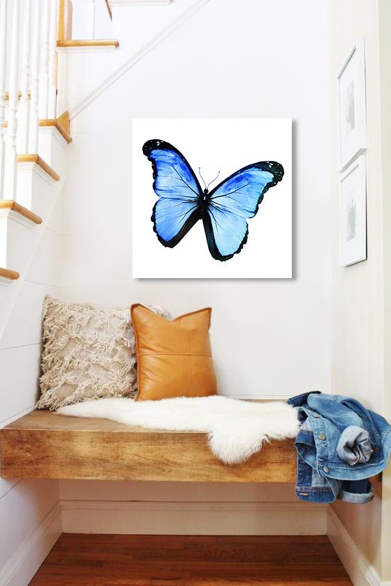 Obraz Modrý Motýľ na zrkadle Mirrora 15 - 50x50 cm (Obrazy Mirrora)