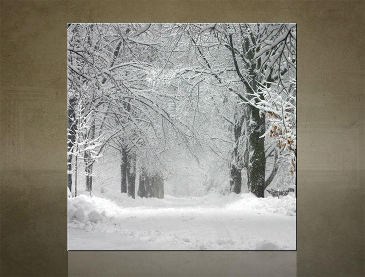 Obraz na stenu ŠTVOREC STROMY - AHD25903