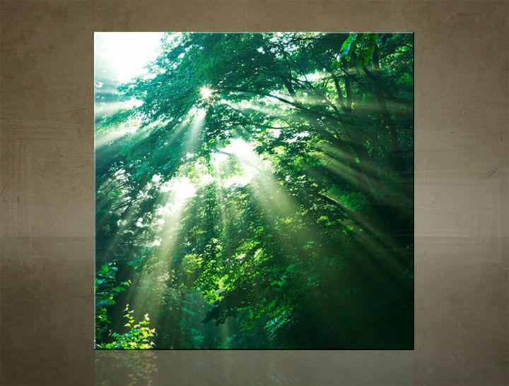 Obraz na stenu ŠTVOREC STROMY - AHD25904