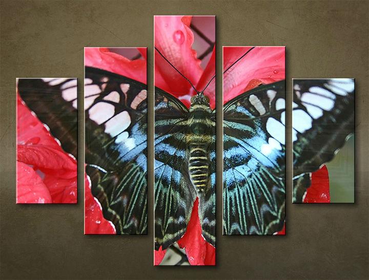 Image of Obraz na stenu 5 dielny ZVIERATÁ ZWI_0007_5EL (obraz na plátne)