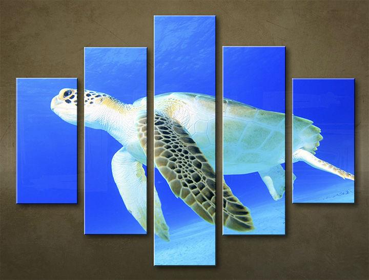 Image of Obraz na stenu 5 dielny ZVIERATÁ ZWI_00102_5EL (obraz na plátne)