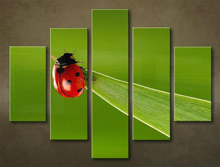 Image of Obraz na stenu 5 dielny ZVIERATÁ ZWI_00103_5EL (obraz na plátne)