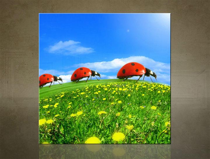 Obraz na stenu ŠTVOREC ZVIERATÁ - AHD25584