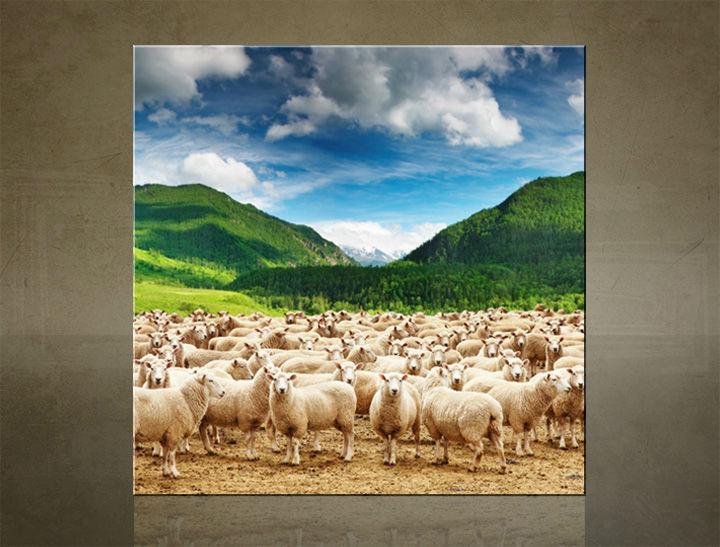 Obraz na stenu ŠTVOREC ZVIERATÁ - AHD25587