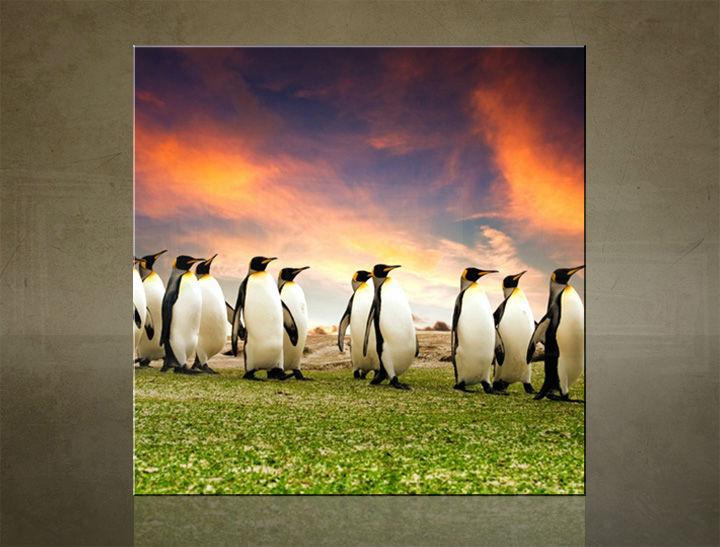 Obraz na stenu ŠTVOREC ZVIERATÁ - AHD25600
