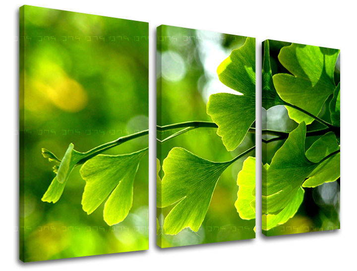 Obraz na stenu 3 dielny RASTLINY RA020E30 (obraz na plátne)