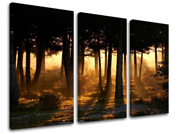 Obraz na stenu 3 dielny STROMY ST025E30 (obraz na plátne)